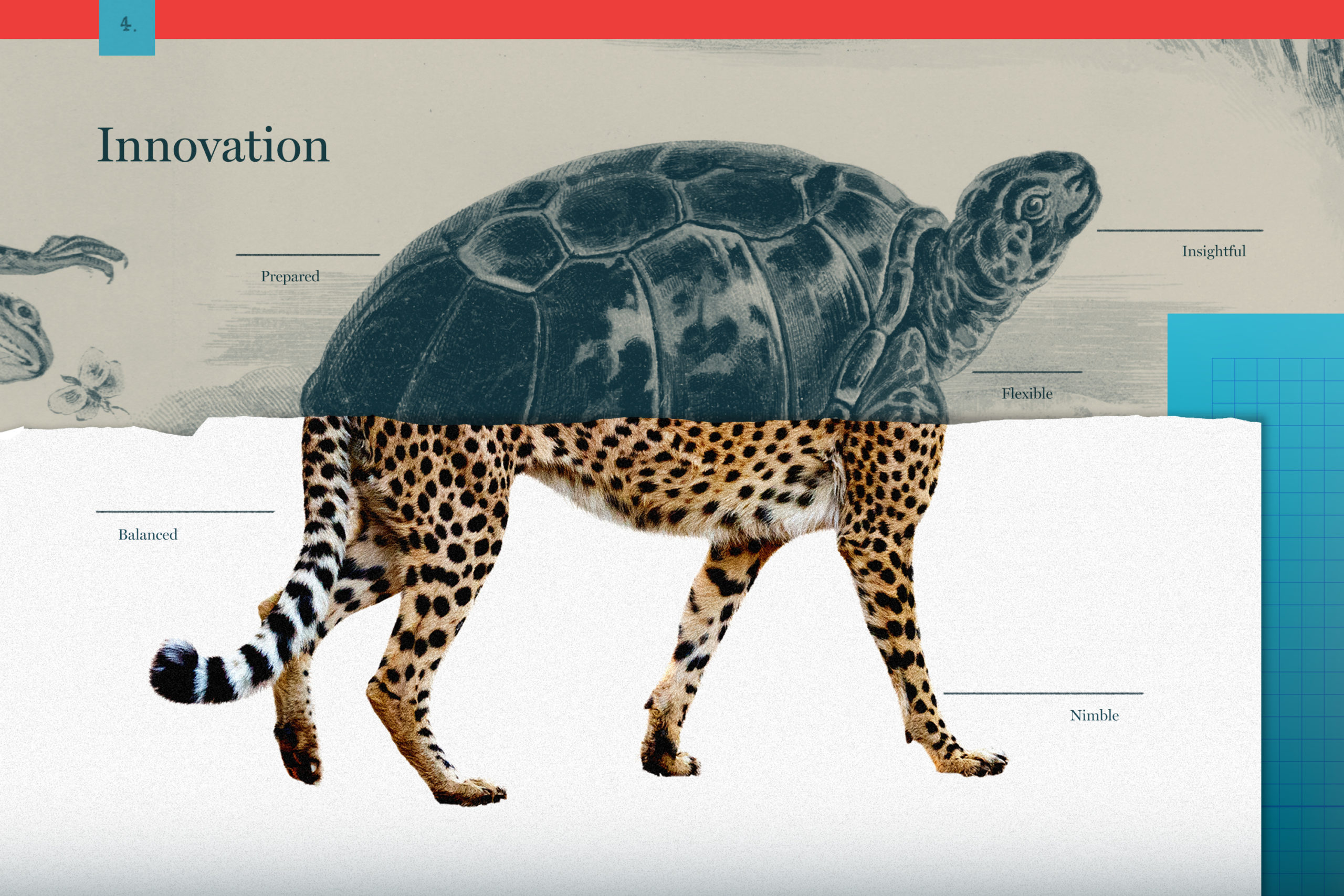 half turtle half cheetah blog graphic